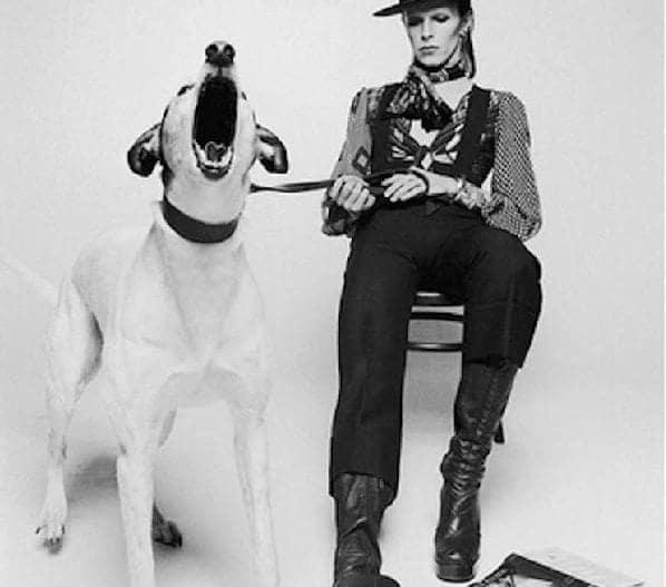 David Bowie,  @Terry O