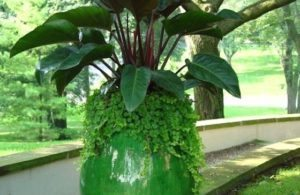 Gorgeous Green Planter