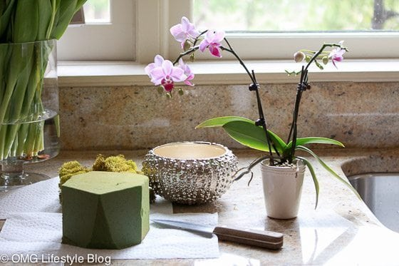 Repotting blooming plants