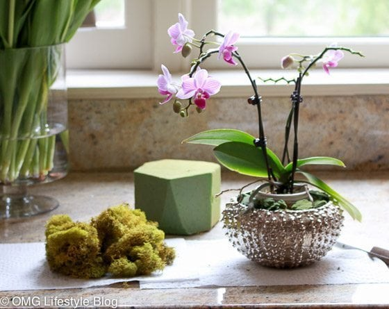 Repotting your orchid in another container