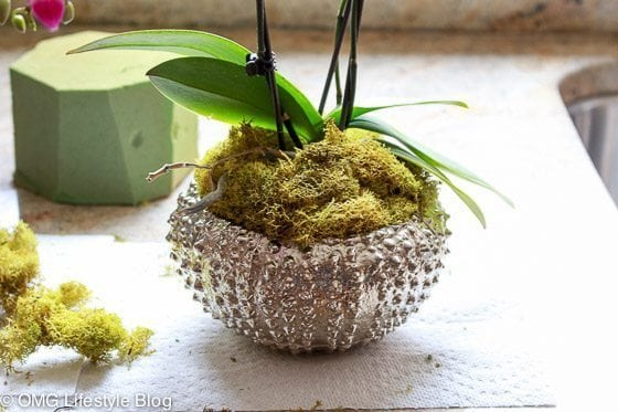 Repotting your orchid (7 of 13)