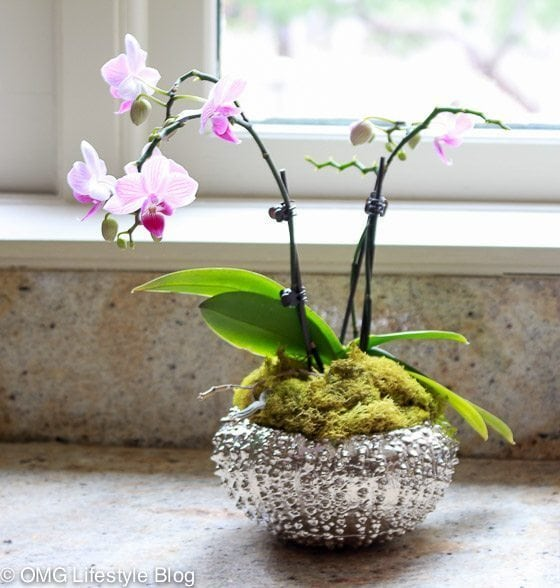 Repotting your orchid (8 of 13)