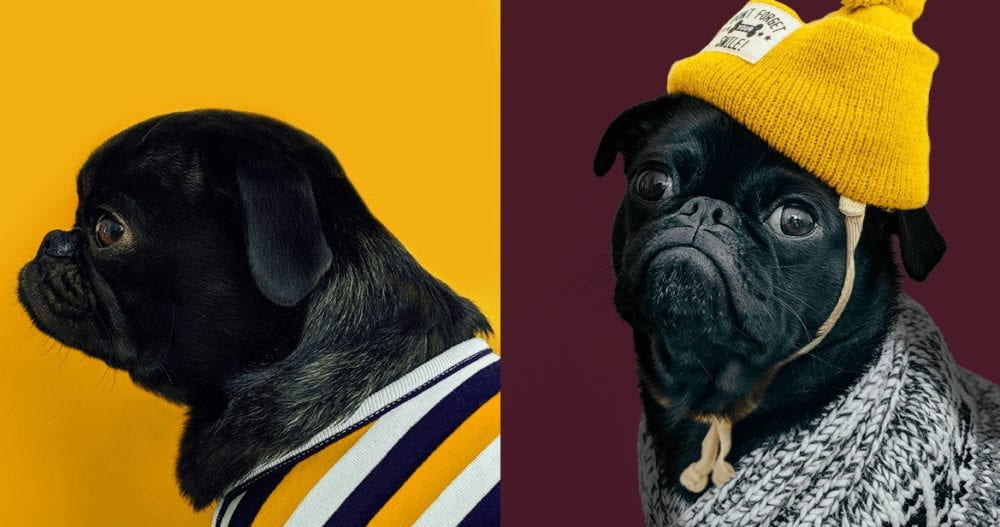 BTW I'm using these pug pics because they're adorable and it was nearly impossible to find a photo that fit my blog post's aspect ratio.