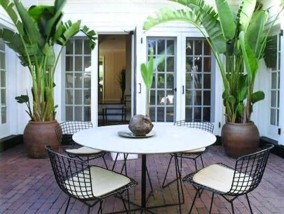 These Potted Banana Palms are all that is needed to make a statement and dress up this small patio. Gorgeous!